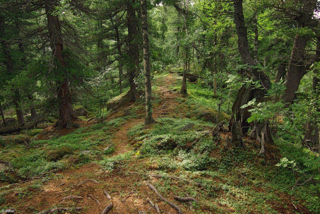 Сказочный лес. Обсуждение на LiveInternet ...: www.liveinternet.ru/users/alemigun/post163457857